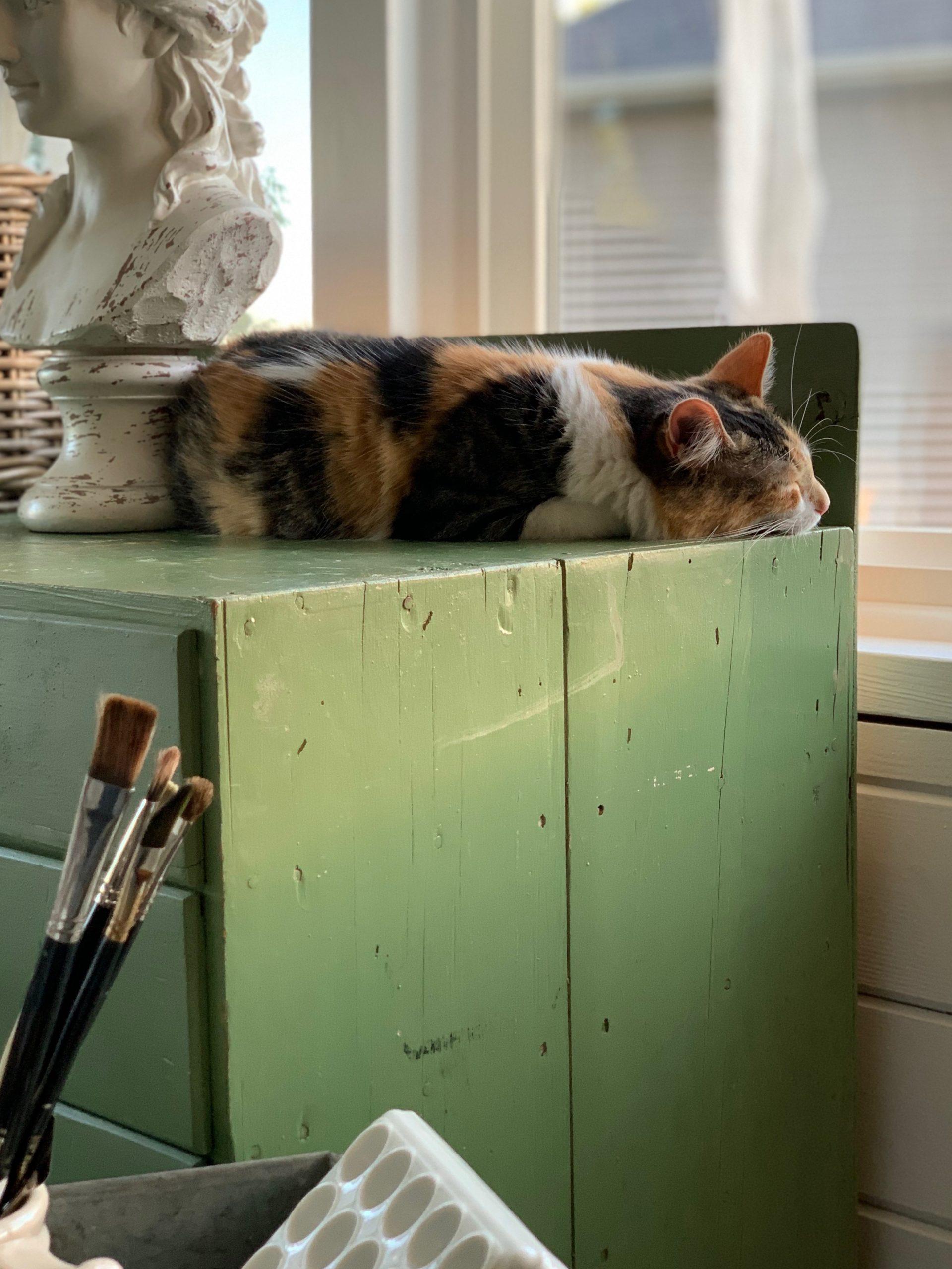 calico cat art studio miss mustard seed