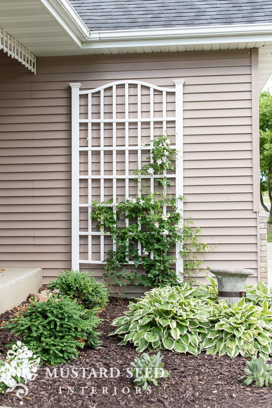 summer 2021 garden update | clematis on a trellis | miss mustard seed