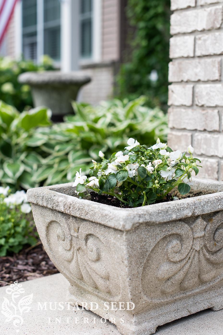 summer 2021 garden update | impatiens | concrete planter | miss mustard seed