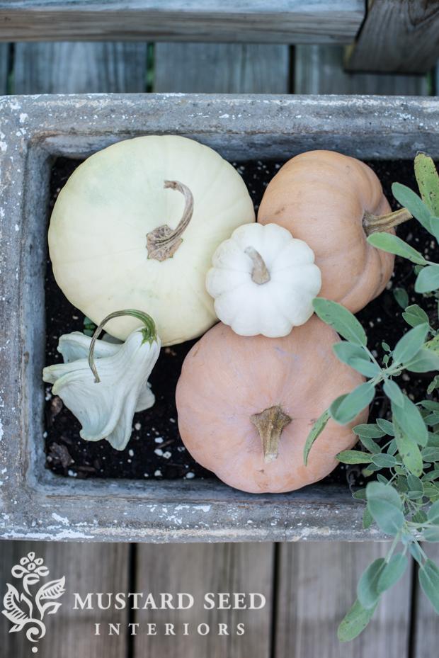 pumpkins in planter | farmhouse fall porch | missmustardseed.com