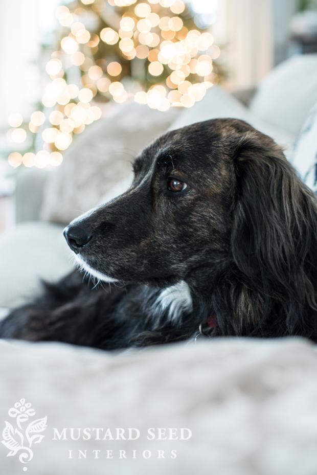 family dog   dog treat stocking stuffer   missmustardseed.com