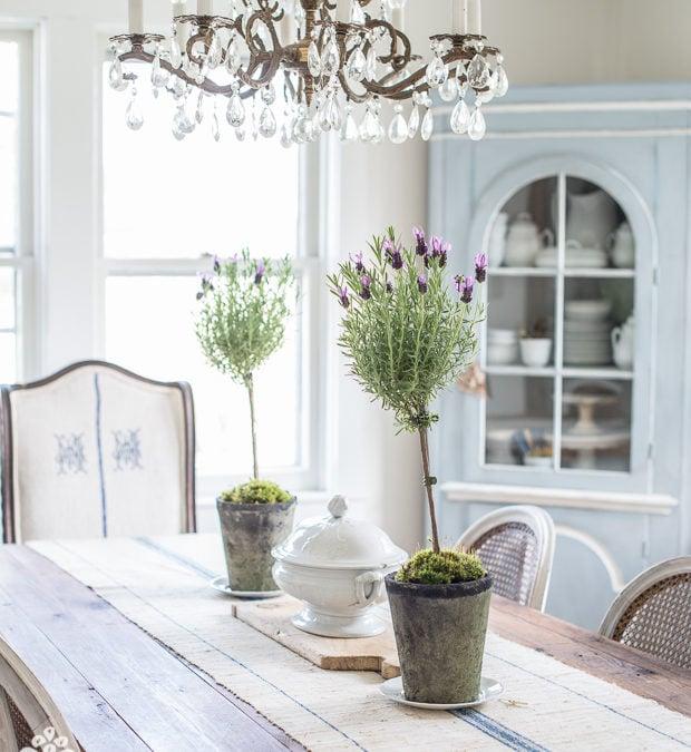 lavender, Anthro inspiration & indigo