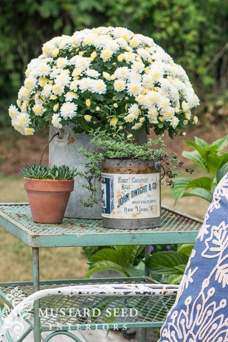 aging terra cotta pots   miss mustard seed